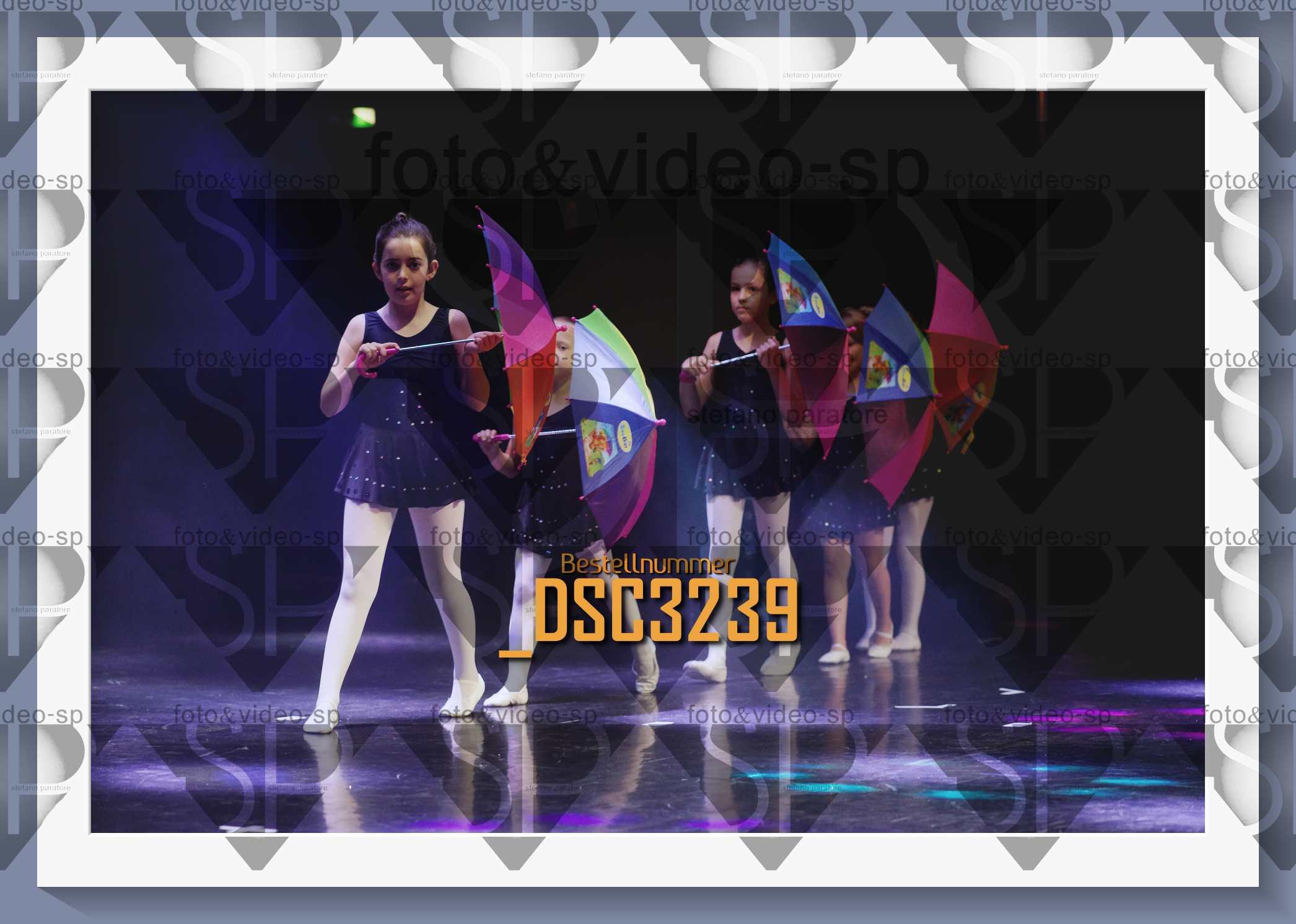 DSC3239