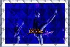 DSC2164