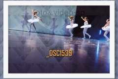 DSC1539